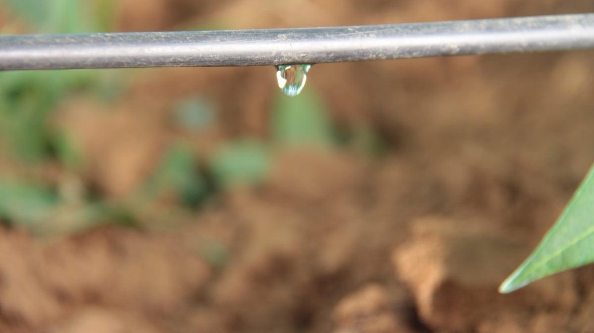 Netafim/Amanco e o sistema de irrigação com cérebro